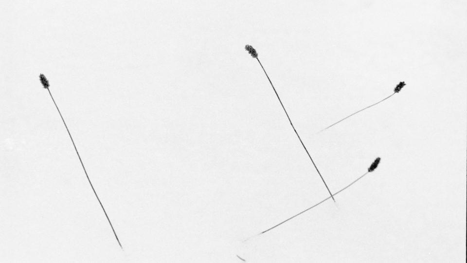 Gräser im Schnee 1986